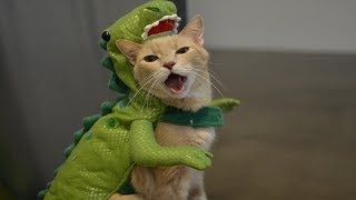 funny cute cats disguised wearing hiluarious costumes