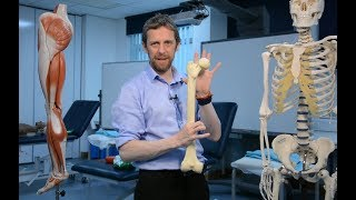 Proximal femur (anatomy)