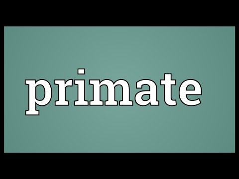 Primate Meaning