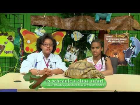 Westbury Middle School: Animal Safari