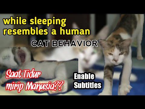 DOMESTIC CAT BEHAVIOR