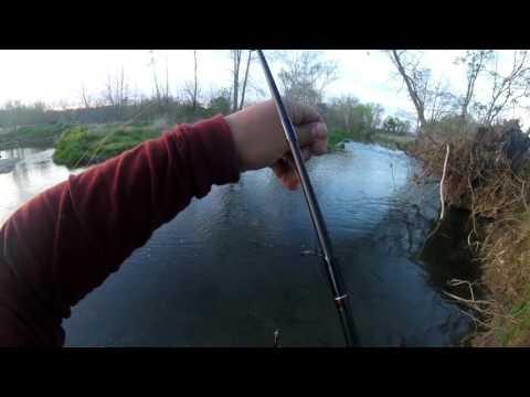 Indiana River Fishing, Big Smallmouth!