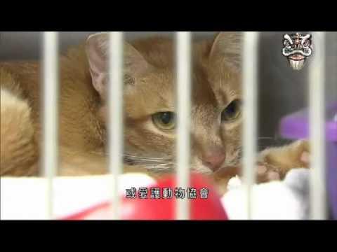 流浪貓狗棄養問題 - YouTube