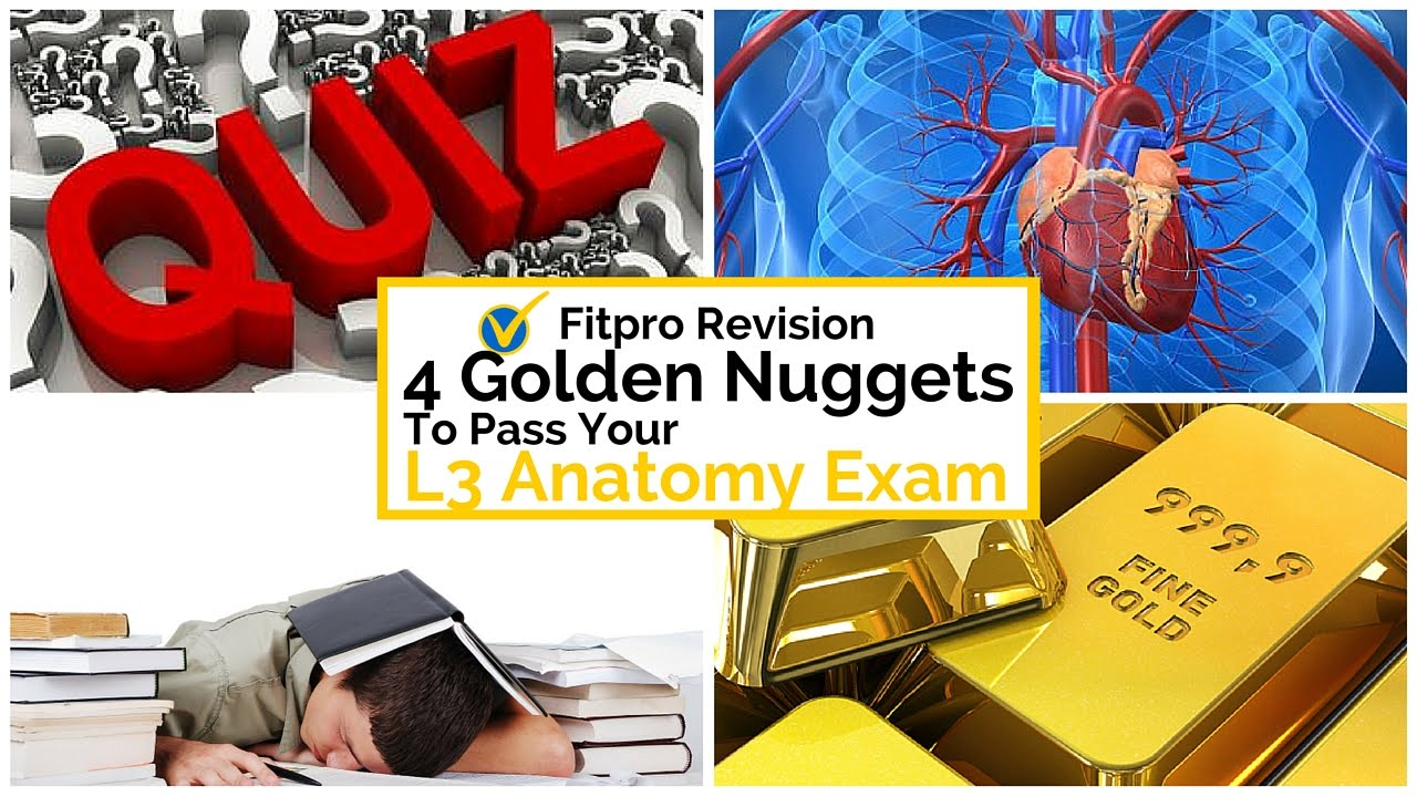 4 Golden Nuggets to Pass Your Level 3 Anatomy Exam - YouTube
