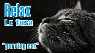 Fusa di gatto, Purring cat, relax music, addormentarsi rilassati, dormire bene, per bambini