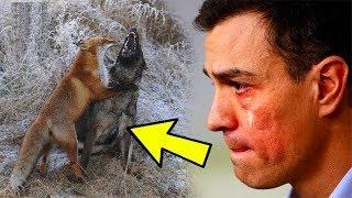 Его собака каждый день убегала на долгое время в лес. Проследив за ней, он был поражен увиденным!