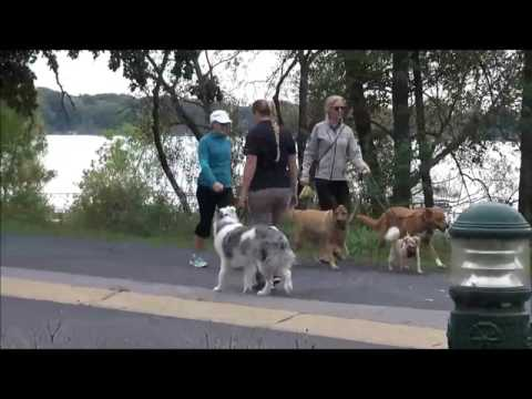 Storm (Australian Shepherd) Boot Camp Dog Training Demonstration