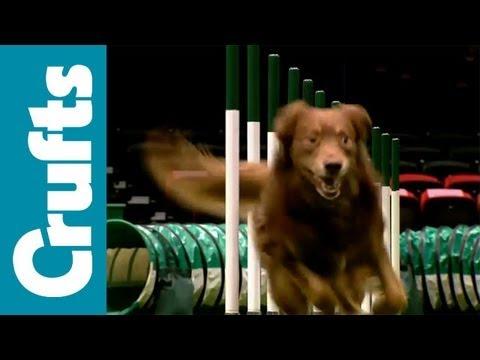 Agility - ABC - Agility - Crufts 2012