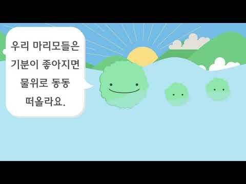 미니가든_애완식물 마리모 키우기_마리모란?