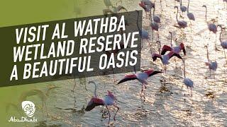 Nature-filled Abu Dhabi - Al Wathba Wetland Reserve | CNN Travel