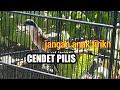 Knp Cendet Pilis Kok Sering Di Anak Tirikn  Mp3 - Mp4 Download
