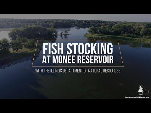 Fish Stocking At Monee Reservoir