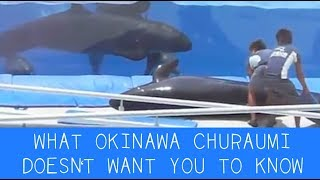 What Okinawa Churaumi Doesn't Want You To Know