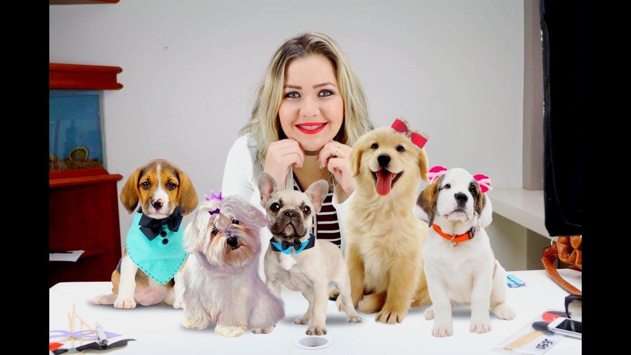 Curso Lacos Para Pet com Alessandra da Fontoura