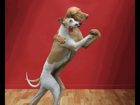 Funny Dogs Dancing Compilation ! Gangnam style