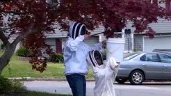 Bee Relocation, Courtesy of Beverly Bees