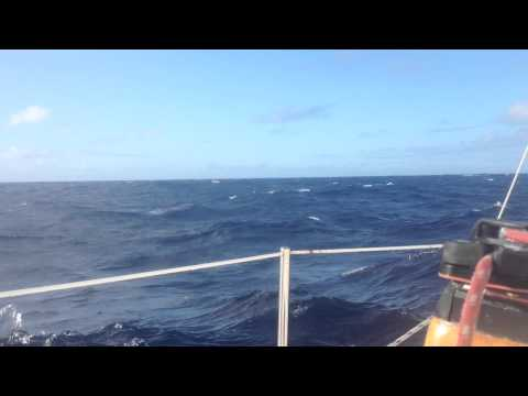 sailing in south pacific ocean; birds