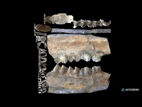 Historical Heritage & Reconstructing Prehistoric Specimens