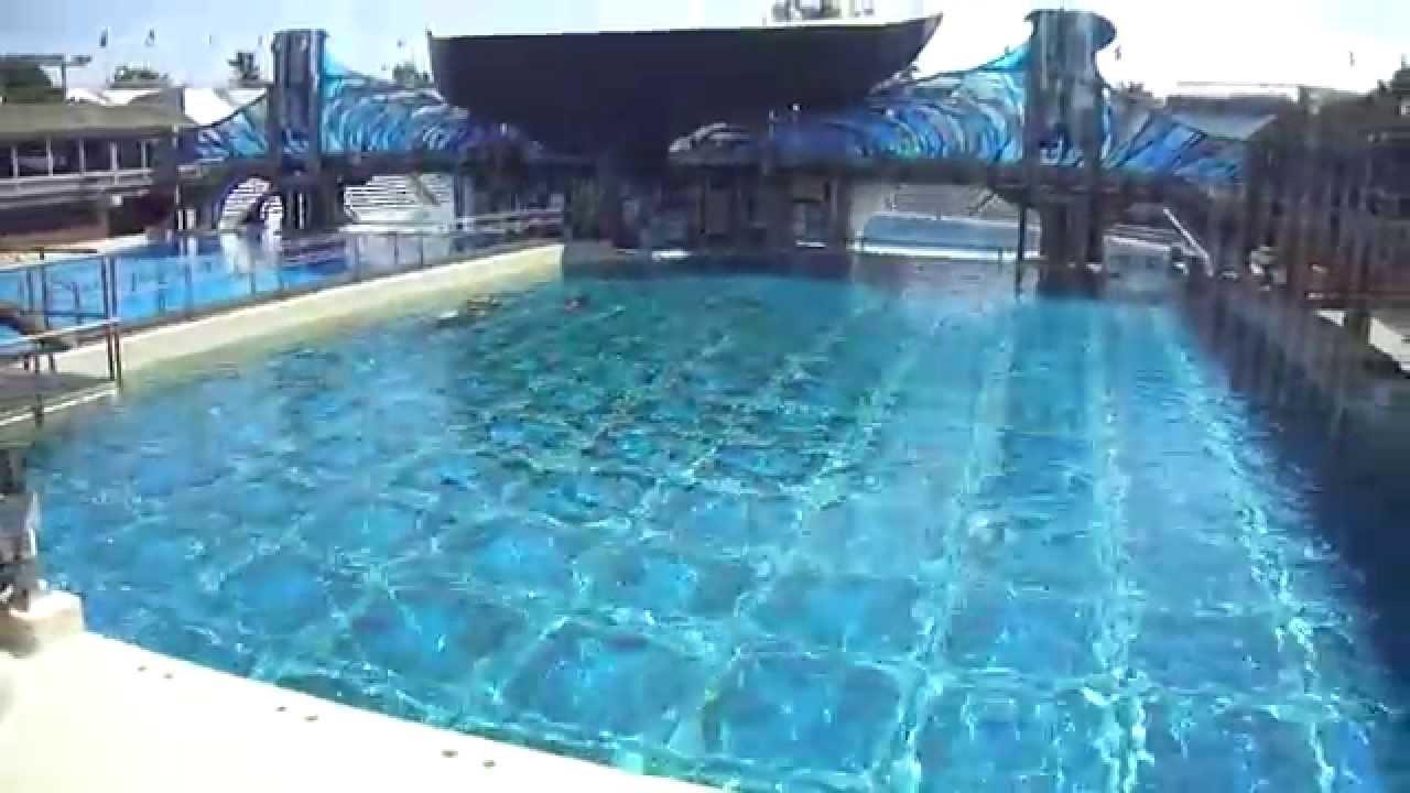 False Bottom Floor - May 17 2014 - SeaWorld San Diego