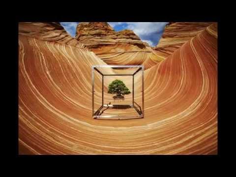 Azuma Makoto Captures His Bonsai Tree's Journey Around The Globe
