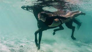 Клип конный спорт (девочка огонь)