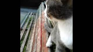 Домашняя кошка не умеет ходить.