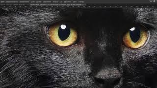 фотообои кошка e-oboi 150х150