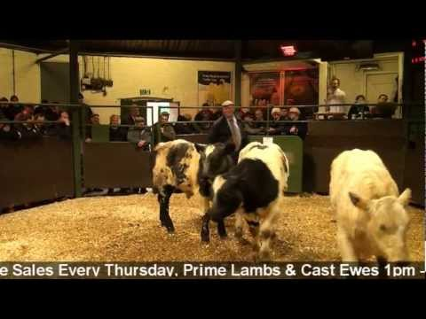 Darlington Farmers Auction Mart - Prize Show and Sale of Store Cattle 12/11/12