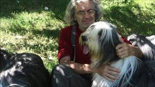 Bearded Collie Gremontree 'One summer day 2020'