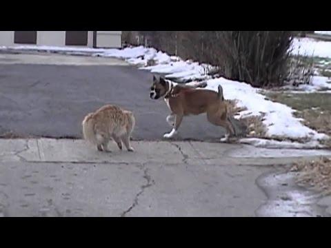 Kedi ve köpek kavga.