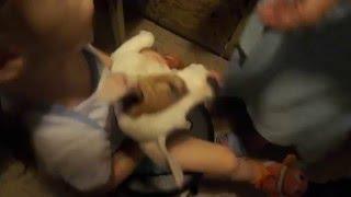 Джек рассел терьер-как дать глистогонное собаке или дикий смех / How to give anthelmintic dog(Джек рассел терьер принемает лекарство / the dog gladly accepted anthelmintic and wild laughter Stasi. https://youtu.be/ntMLTFPXdxg., 2016-04-03T10:42:40.000Z)