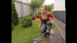 видео Газонная трава - когда сажать и как ухаживать