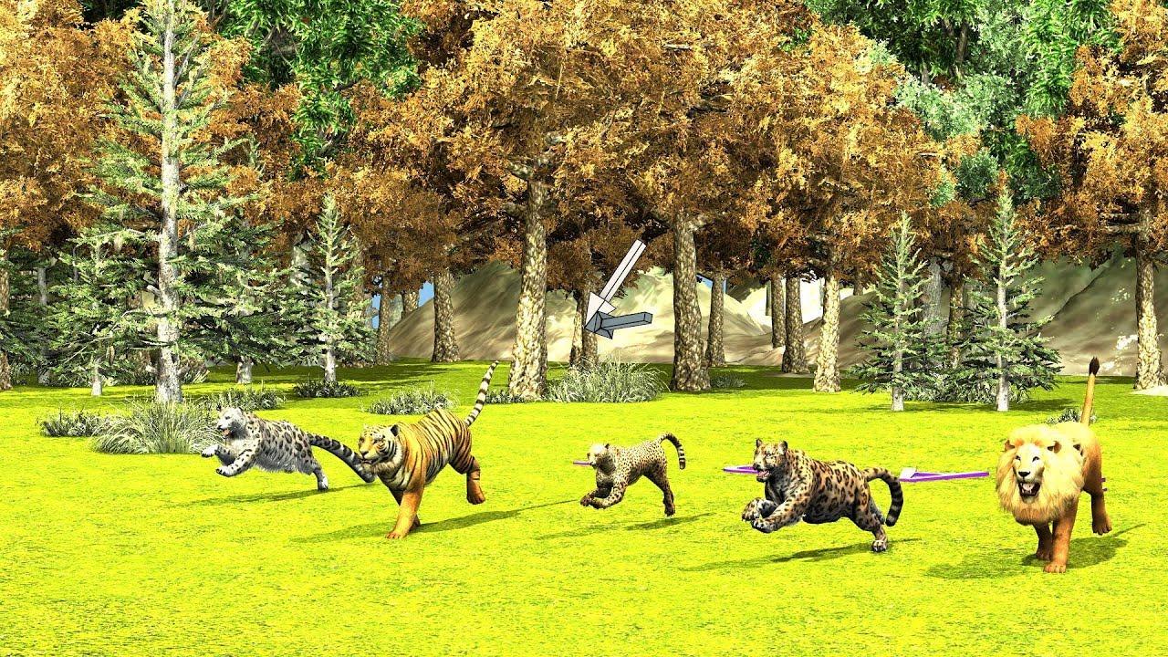 Animal Race wild cats Running Race lion tiger cheetah jaguar and leopard
