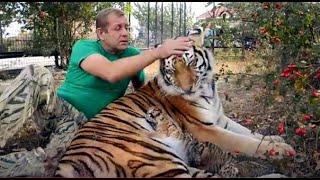 Мама тигрица принимает ЧЕТВЕРТОГО ТИГРЕНКА !