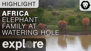 Elephant Herd Drinking At The Watering Hole - Live Cam Highlight 05/01/17