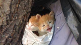 Брошенные и бездомные коты поселились в домах на деревьях.
