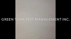 Bed bugs gone wild! (Green Team Pest Management Inc.)