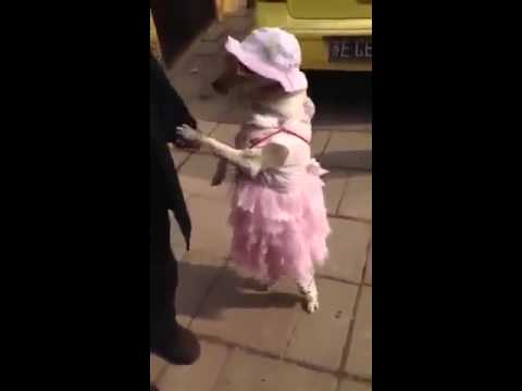 Yen aala paakkaporan song for a dog