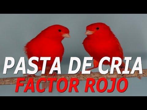 Alimentación Canarios - Rojos