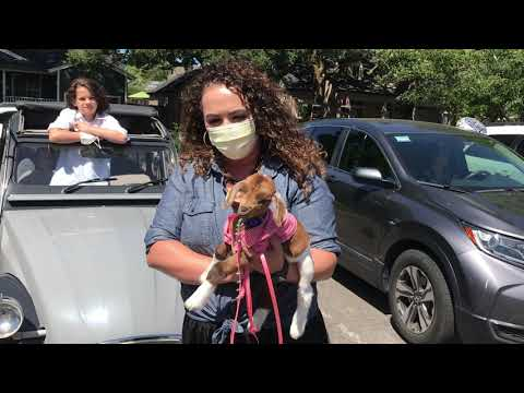 Baby goat attends Yountville Elementary School goodbye