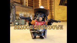 Crusoe the Cowboy Dachshund: Saloon Showdown