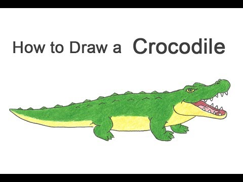 How to Draw a Crocodile / Alligator (Cartoon) - YouTube - photo#23