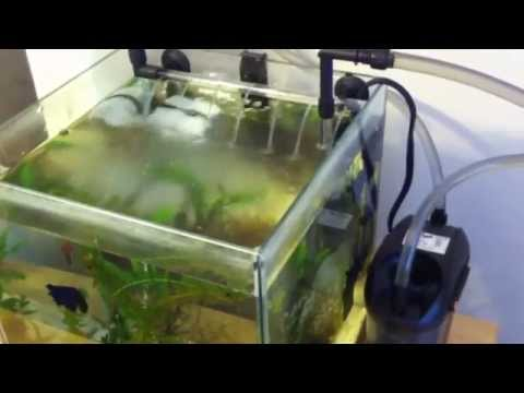 Zoo Med Nano Cannister Filter 501 for Fluval Chi Review