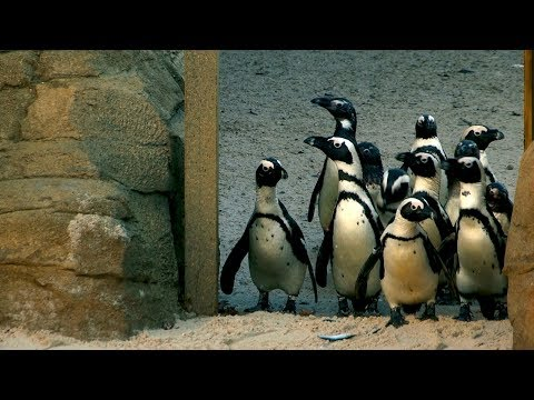 The Family Who Bought A Zoo: New Penguin Enclosure