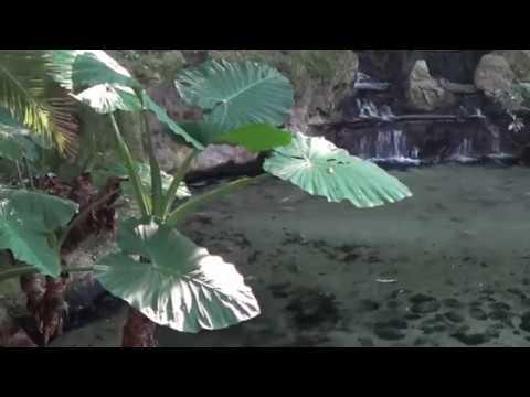 Нежнейший звук водопада и пение птиц