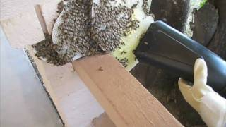 Bee Vac 3000 Part 3