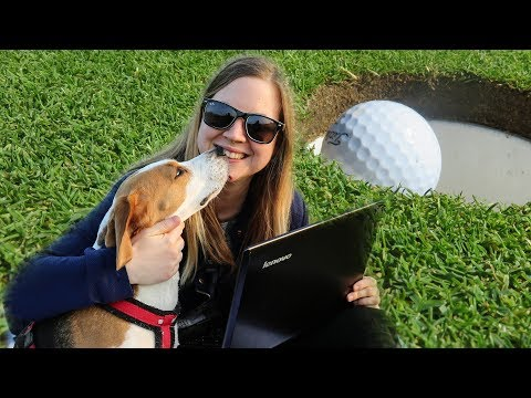 Why Is Beagle The Best Dog Breed??
