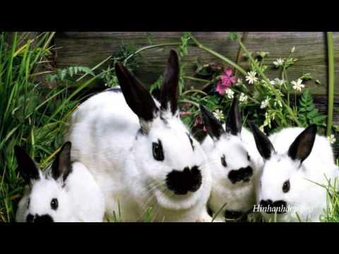 Tổng Hợp Hình Ảnh Con Thỏ Dễ Thương Nhất