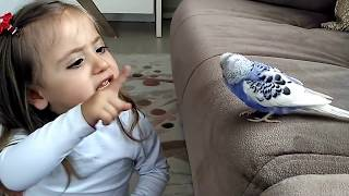 Muhabbet Kuşu Ve Minik Kız Yok Böyle Tatlılık Mutlaka İzleyin