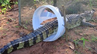 trap crocodile